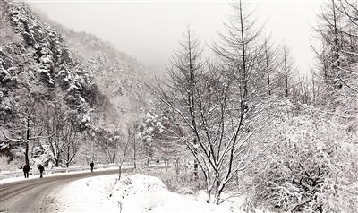秦岭飞雪!今明秦岭山区积雪达10厘米 进...