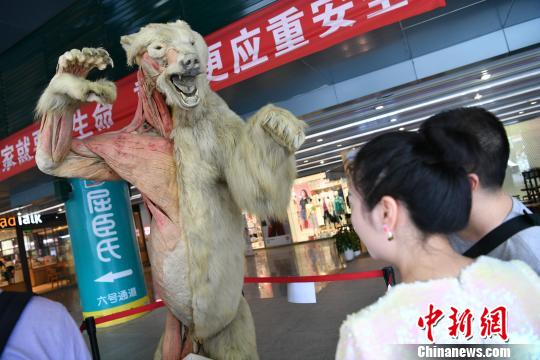 北极熊标本亮相成都引围观